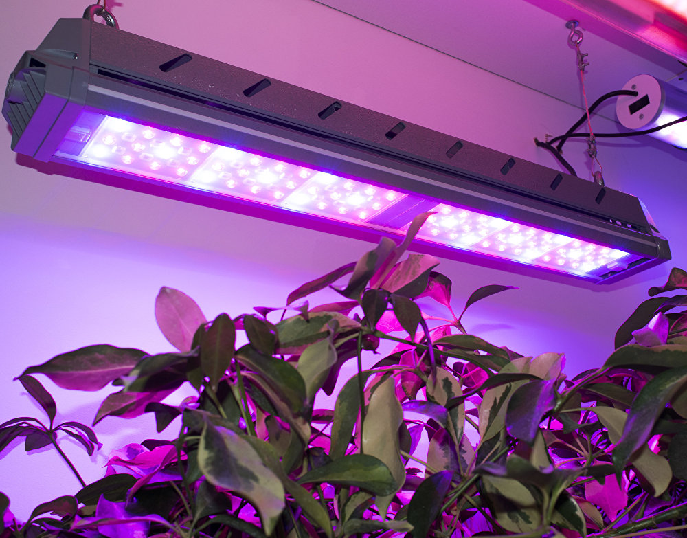 Incotex horticultural lighting